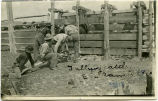 Tallying cattle at Eil Ranch, N.D.