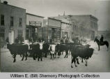 Voh's Meat Market Cattle outside Market, Williston, N.D.