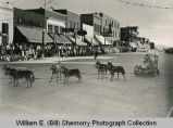 Dog sled stroller at parade, Williston, N.D.
