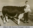 Upper Missouri Valley Fair 1961, Ronald Sylte with calf, Williston, N.D.