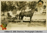 "Mrs. William O. ""Big Bill"" (""Dad"") Hollar's second wife in buggy outside Williston Central School"