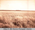 Farmer's Union Grain & Supply Co. field before pesticide application, Williston, N.D.
