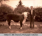 Fall Festival 1947, Verlin Hanson and grand champ heifer, Williston, N.D.