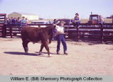 Tioga Farm Festival 1982, girl with grand prize heifer, N.D.