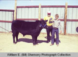 Tioga Farm Festival 1982, boys with first place bull, N.D.
