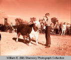 Tioga Farm Festival 1961, boy showing steer, Tioga, N.D.