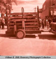 Tioga Farm Festival 1961, animal on display, Tioga, N.D.