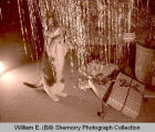 Cat playing with tinsel on Christmas tree, Williston, N.D.