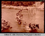 Mars Task Force American troops cross pontoon bridge in Burma