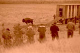 Buffalo released into Theodore Roosevelt National Park, N.D.