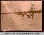 Deer in snowy field, Northwest Williston, N.D.