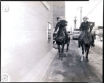 Horses at the drive thru at the American State Bank opening, Williston, N.D.