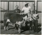 Bill Shemorry and steer, N.D.