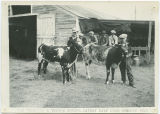 Lyle Truedson and Vernon Sheard, Cathay Calf Club Members, Wells County Fair, Fessenden, N.D.