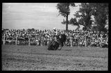 Gene Autry and his horse Champion bowing to crowd, Rodeo Days, Mandan, N.D.