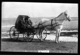 Bill and Joe Matecek with horse and buggy, north of Whitman, N.D.