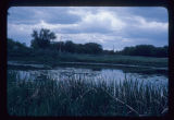Lily pond, Antler Creek, Bottineau, N.D.