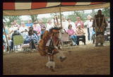 Boys Fancy Dance,  Mandan Indian Cultural Powwow, Mandan, N.D.