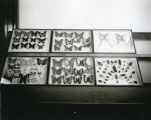 Butterfly and beetle exhibit, Liberty Memorial Building, Bismarck, N.D.