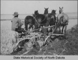 Plowing with four horse team