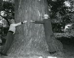 C. Norman Brunsdale and man with North Dakota's biggest tree, near Mayville, N.D.