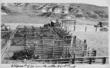 Shipment of Les Connell's cattle to south St. Paul, Medora, N.D.