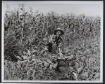 Lady with garden vegetables, Bismarck, N.D.
