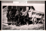 Horses Dan and Chub with Leonard Bird in wagon on Howard Bird's homestead, 3.5 miles northwest of Flaxton,