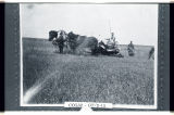 Bert Rock and brother Ray cutting oats with binder near Heil, N.D.