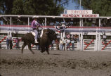 Trained Buffalo, Mandan Rodeo, Morton Co.