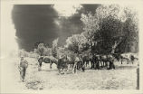 Man with horses, McKenzie County, N.D.