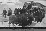 Last buffalo killed in North Dakota, January 1907 : Casselton, North Dakota