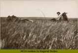 Man seated in buggy in wheat field