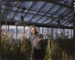 L. R. Waldron, plant breeder at N.D.S.U., in greenhouse looking over wheat foundation stock