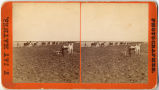 Plow teams on Dalrymple farm, Casselton, D.T.