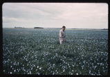 Man standing in flax field, Hoople, N.D.