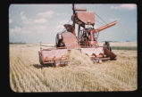 Combining Durum wheat on the Russell Duncan farm, Calvin, N.D.